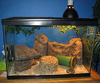 Jokzoo Com The Leopard Gecko Habitat